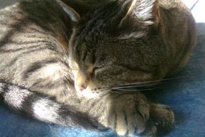 Sammie the cat sleeping