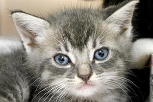 Hailey the kitten from a shelter in Jacksonville, Florida