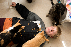 Child volunteer Jacob playing with the FELV-positive cats at Best Friends Animal Sanctuary