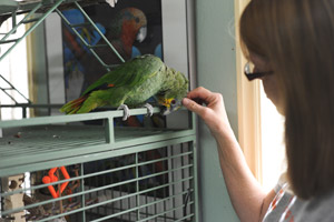 Joe the parrot with Jacque