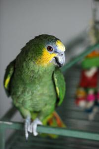Joe the Amazon parrot had severe social anxiety issues
