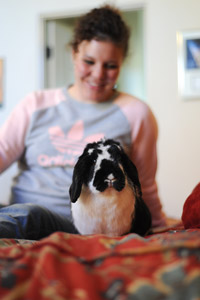 Laid-back Lacey the rabbit sitting on a woman's lap