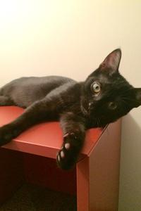Levi the black kitten