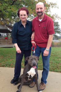Levi the gray pit bull with his new family
