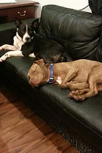 Frankie the dog from Sammy's Hope with behavioral issues to overcome enjoys life in his new home