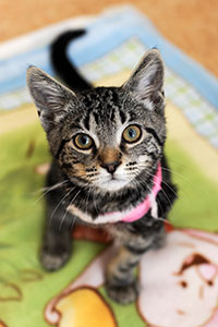 This cute kitten is winning over visitors and staff.