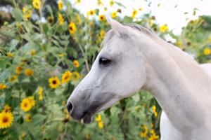Gracie the horse