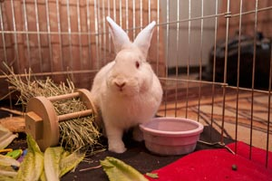 Norah the rabbit in her enclosure