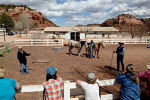 Horses participating in the Rehoming for Life program at Best Friends Animal Sanctuary