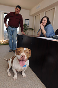 Pepsi the pit bull loves his weekly trips to the HR office