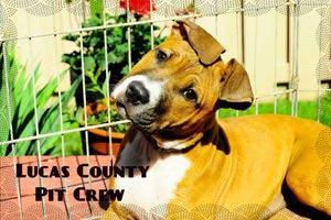 Praire the dog from the Lucas County Pit Crew