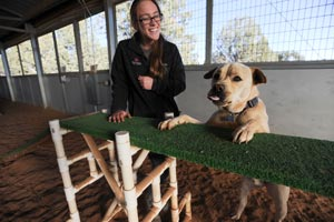 Trainer with Tig the dog who is practicing agility training to help him with impulse control