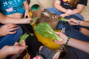 Girls from the Re-Creation Retreat residential treatment center feeding a rabbit lettuce at Best Friends Animal Sanctuary
