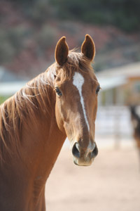 Red the neglected former racehorse at Best Friends Animal Sanctuary