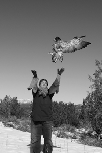 Red-tailed hawk release day