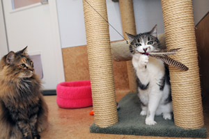 Senior cats Patches and Roxie enjoy a little playtime