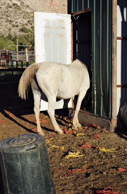 Smart white horse