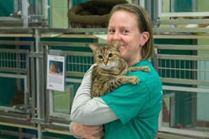 Nellie the senior brown tabby cat with Jennie Wright