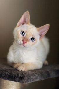 Sinatra the kitten