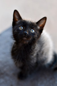 Ashby the black kitten