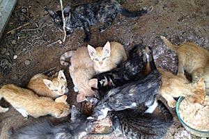 Central Texas Feline Rescue feeding kittens