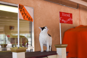The cats quickly started enjoying the Hotel Catorado