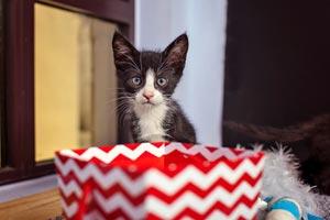 Yoshi the kitten