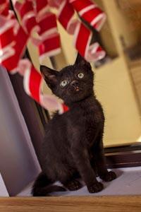 Yessi the kitten