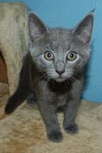 Tinsel the kitten from Mt. Olive TNR Project