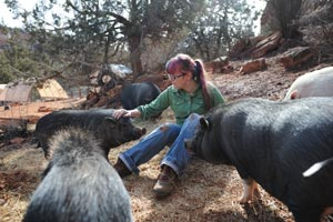 Group of pigs with a caregiver at Best Friends Animal Sanctuary