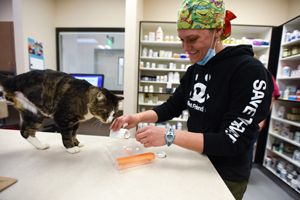 Tommy the tabby cat at the pharmacy