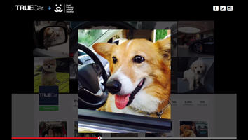 Photo of a dog sitting in the driver's seat of a car