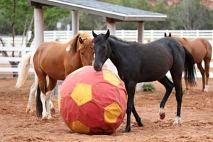Uno and Legs the horses playing with a training ball