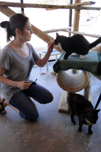 Becky Verona volunteering at Cat World at Best Friends Animal Sanctuary