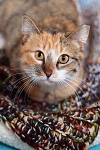 Brianna the cat