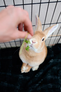 Edna enjoying some cilantro