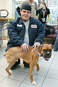 Oscar the boxer, a favorite dog with Salt Lake County Animal Services staff, got his own home