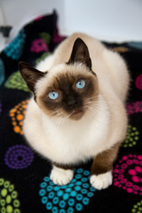 Karou the cat