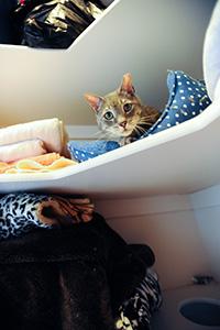 Michael the community cat feeling better in his cozy spot