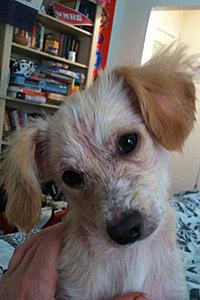 PJ the puppy who had mange
