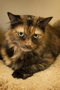 Pollyanna the cat