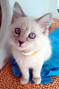Sarah the kitten from Adopt & Shop