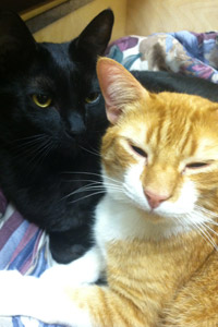 Best Friends Animal Society Henri and Sherbert