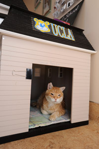 Sunny the cat loves his new UCLA house at Best Friends