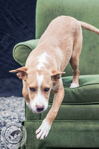 Gumby the dog from Valley River Humane Society