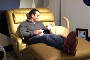Man petting a cat at Purringtons Cat Lounge