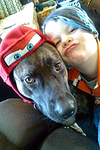 Willow the pitbull dog was helped by Voiceless-MI