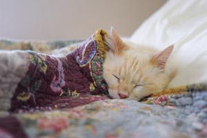 Romeo snuggled in