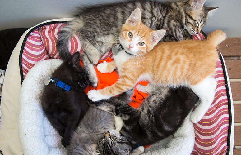 Kitten pile of assorted colors