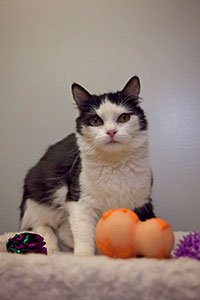 Lani a timid cat from a hoarding case